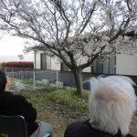 桜花見とガラス越し面会についてのお知らせのサムネイル